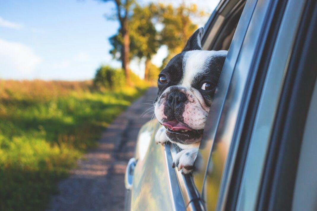 Hundebur til bilen